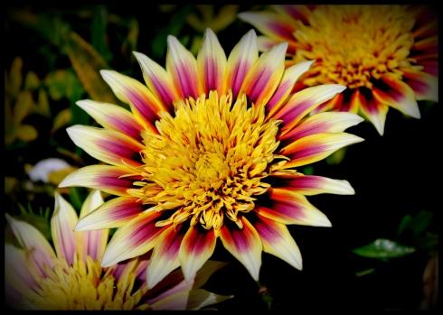 flower in december