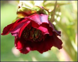 Hollard Garden 1