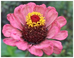 garden flowers 1
